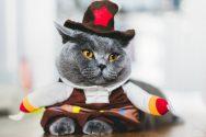 Είδη cat party