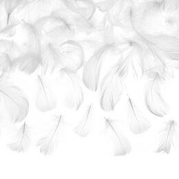 Διακοσμητικά πούπουλα Άσπρα